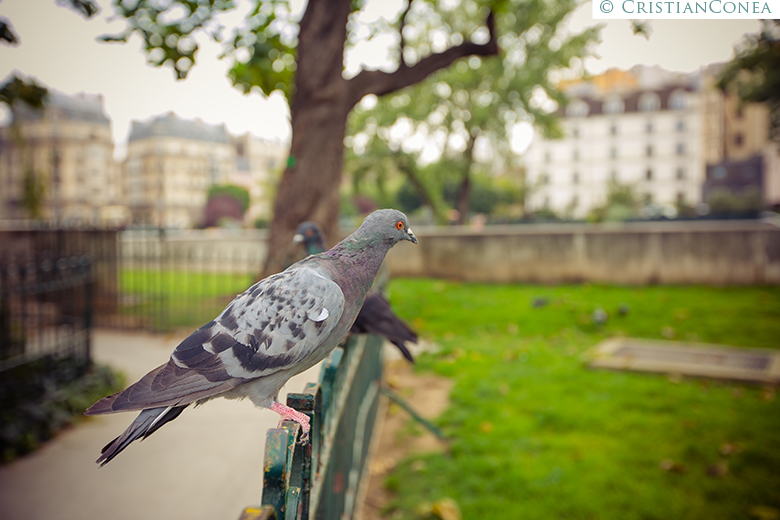 love the dress paris © cristian conea (36)