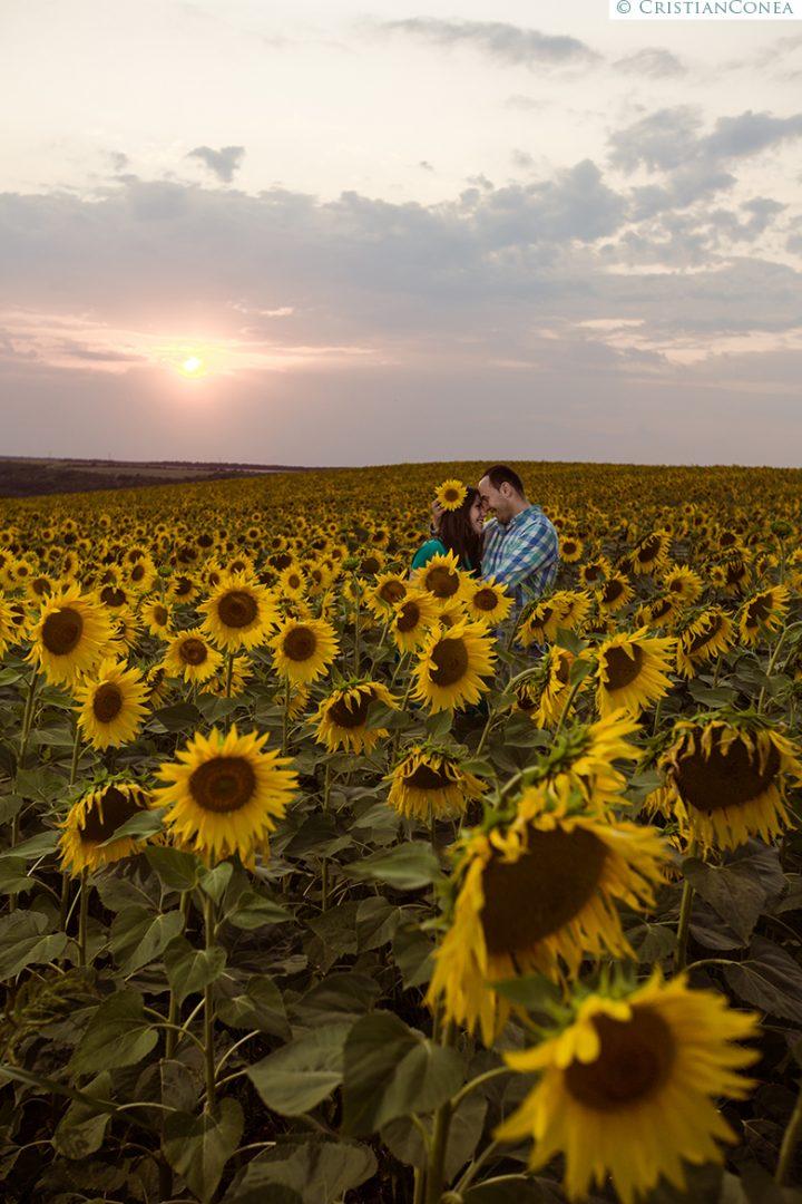 Biglietti Matrimonio Girasoli : Lan floarea soarelui archives cristian conea fotograf